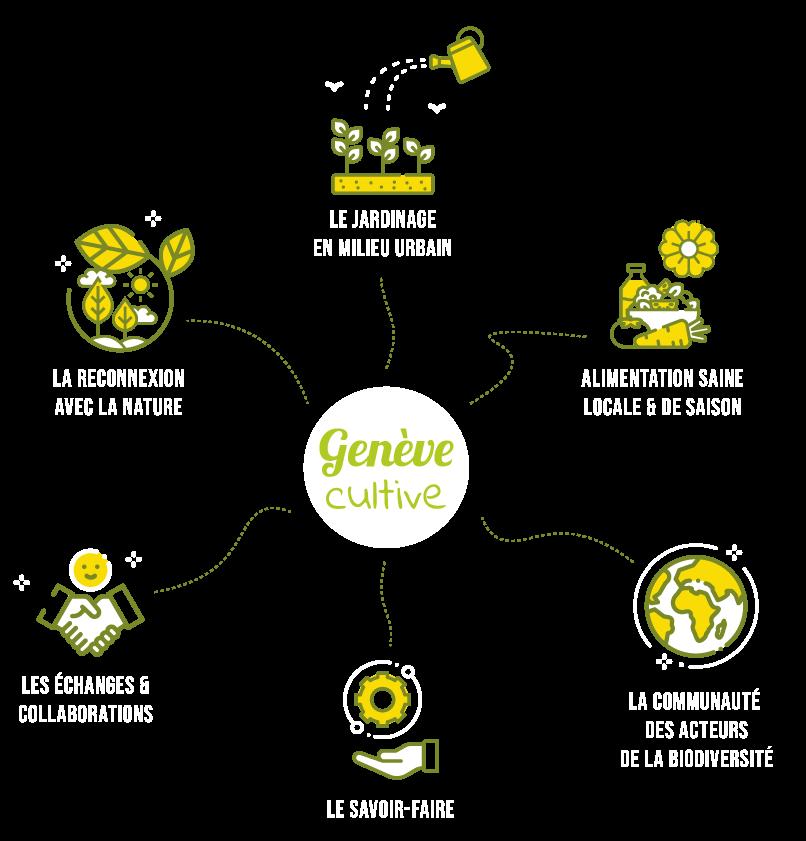 infographie genève cultive agriculture urbaine potager urbain genève potager commun atelier jardinage enfant le potager urbain facile et naturel jardin urbain balcon