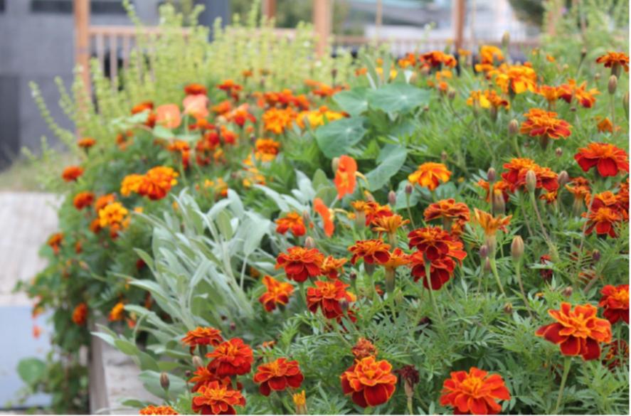 fleurs jardin urbain genève potager collectif comment faire un potager urbain