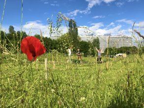 potager des nations jardin urbain potager urbain collectif genève comment faire un potager urbain le potager urbain facile et naturel